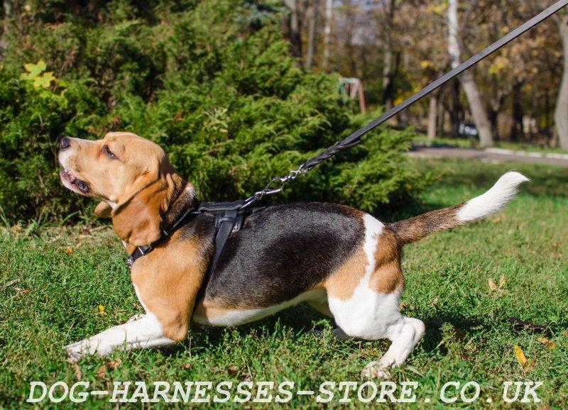 big dog wiring harness big dog gas tank wiring diagram