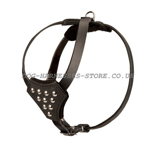 Small Dog Studded Harness