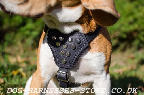 Harness for Beagle