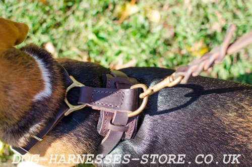 Dog Harness for Beagle