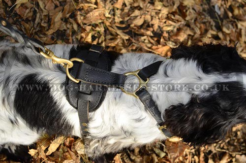 Spaniel Dog Harness
