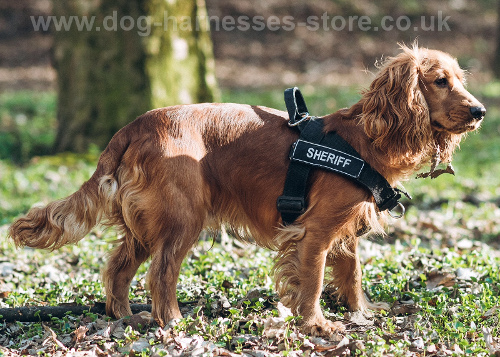 Adjustable Dog Harness for Spaniel