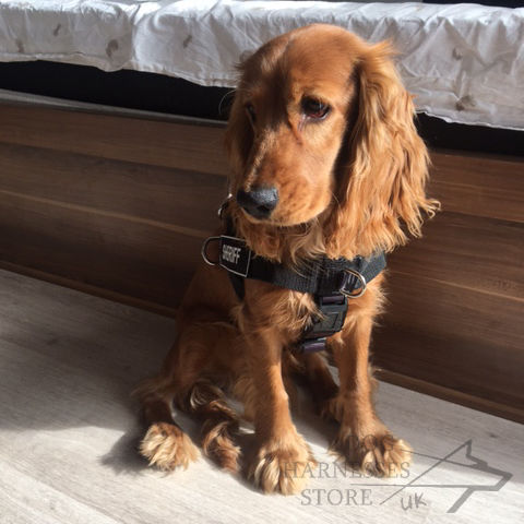 Spaniel Harness UK