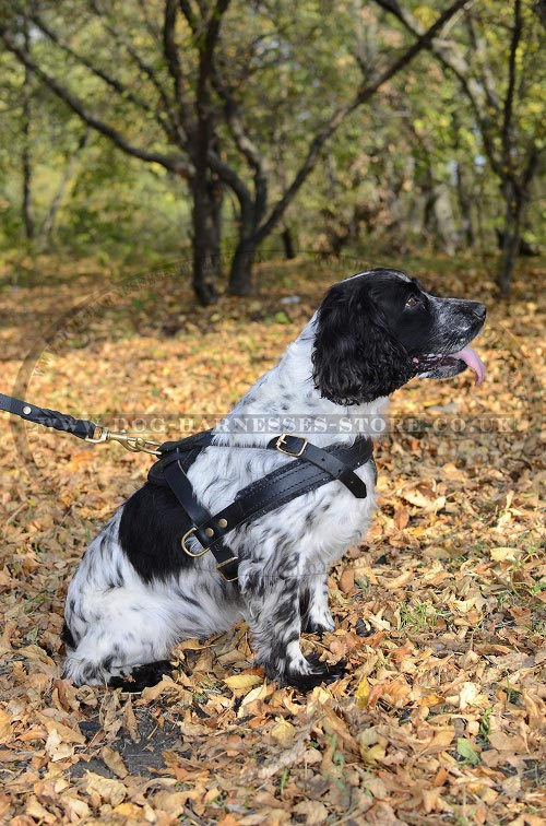 Cocker Spaniel Harness