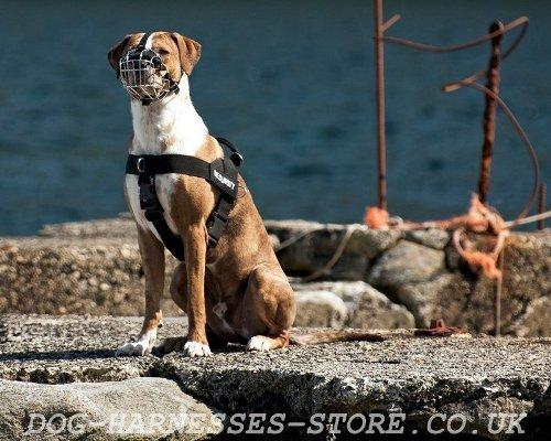 Buy Leukeran For Dogs Uk