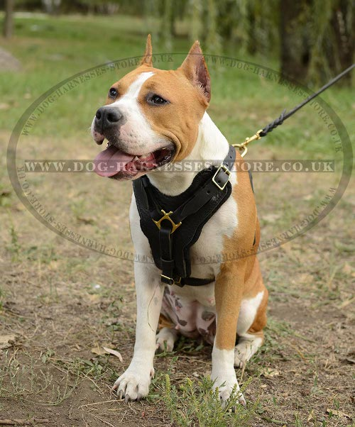 Attack Training Harness