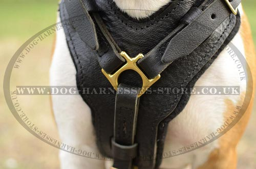 Staffy Harness UK