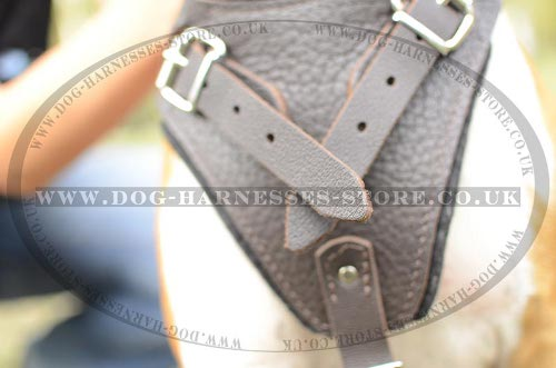 Amstaff Dog Harnesses UK