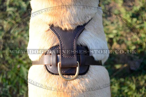 Studded Dog Harness