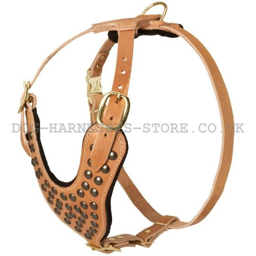 Studded Leather Dog Harness UK
