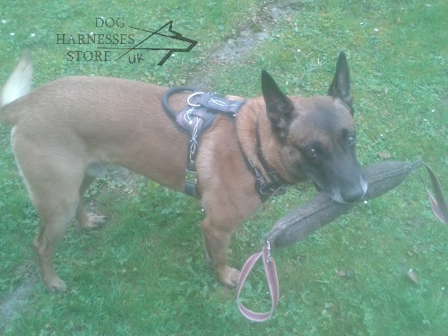 Malinois Harness
