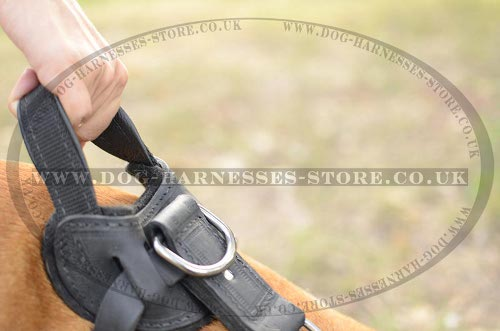 Dog Harness with Handle for Amstaff UK