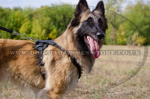 Tervuren Harness