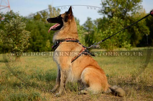 Tervuren Harness UK