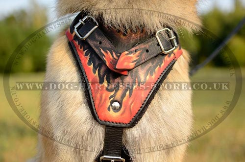 Tervuren Harnesses
