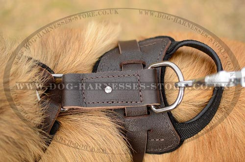 Tervuren Harnesses UK