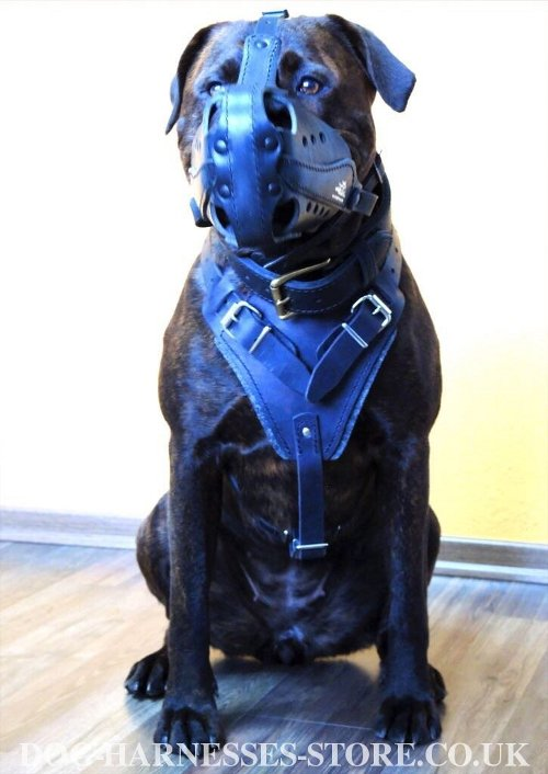Training Harness for Large Dogs