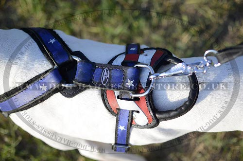 USA Dog Harness for English Pointer UK