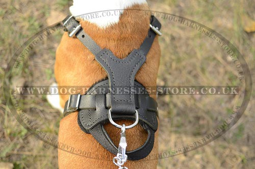Working Dog Harness for Amstaff UK with Handle