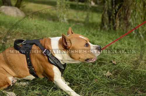 Working Dog Harness for Amstaff UK