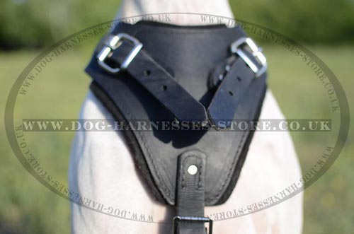 Dog Harness for Pointer UK