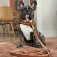 Dog Leash for French Bulldog Walking and Training of Leather