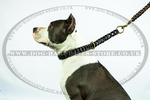 Amstaff Leash UK