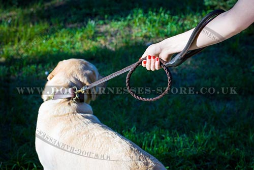 Best Leash for Labrador