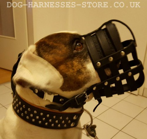 American Bulldog Muzzle UK