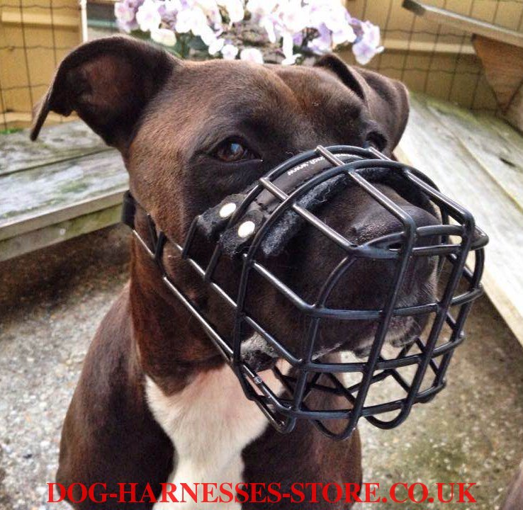 Amstaff Dog Muzzle UK. Our Rubberized Wire ...