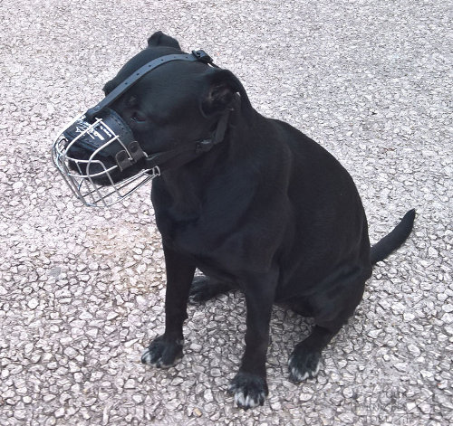 Basket Muzzle for Labrador