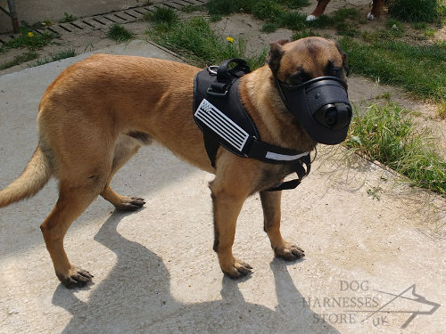 Belgian Malinois Muzzle UK