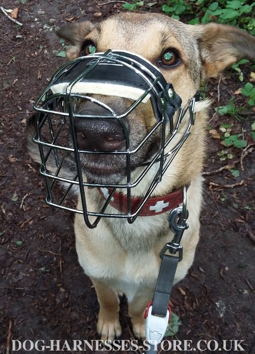 Best Dog Basket Muzzle