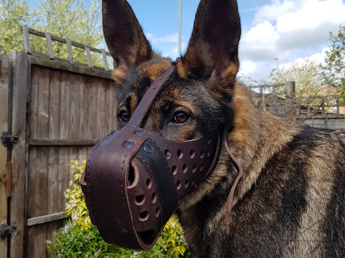 Best Dog Muzzle for German Shepherd