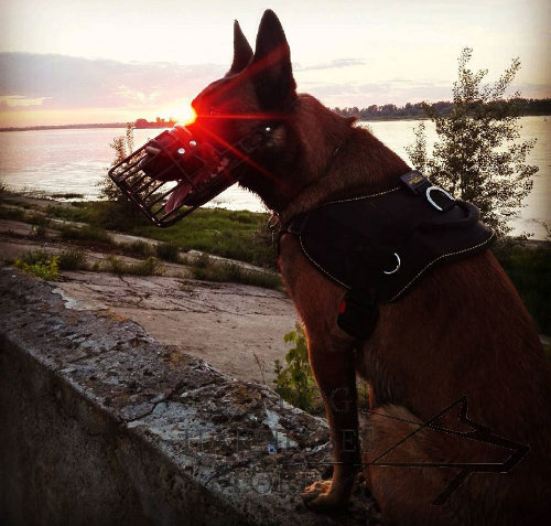 Best Muzzle for Belgian Malinois