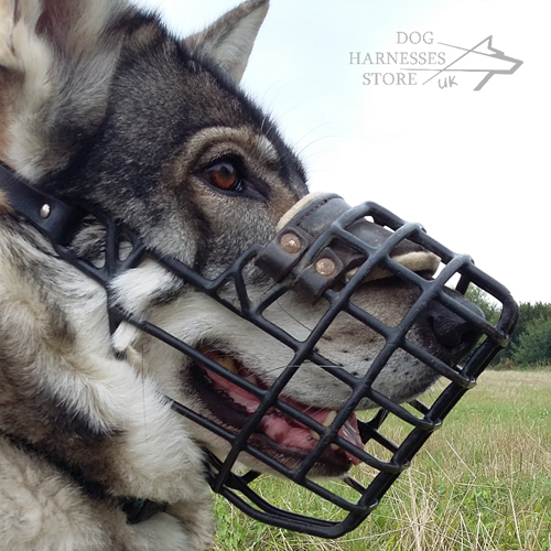 Northern Inuit Dog Muzzle