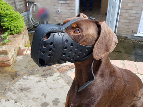 Doberman Leather Muzzle
