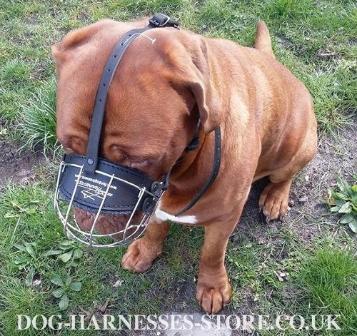 Dog Muzzle for Dogue de Bordeaux