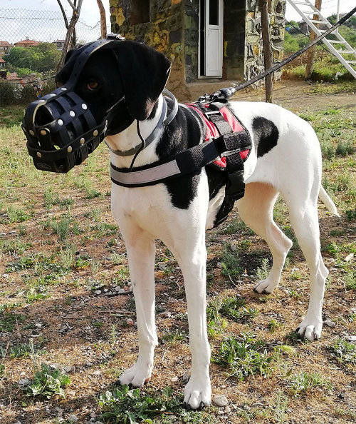 Dog Muzzle for Great Dane