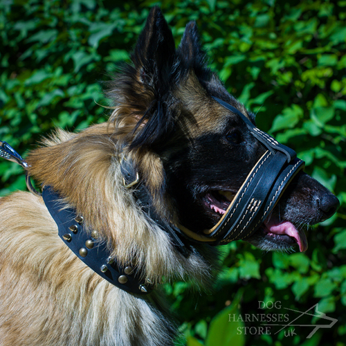 Tervuren in Dog Muzzle Loop