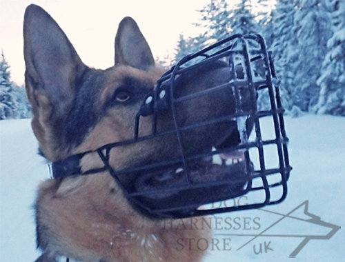 German Shepherd Muzzle UK