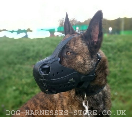Herder Dog Muzzle UK