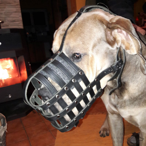 Large Dog Leather Muzzle