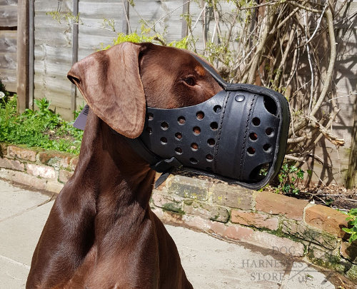 Leather Doberman Muzzle