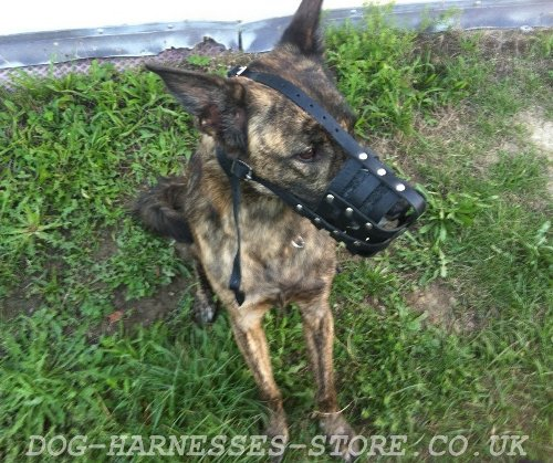 Leather Dog Muzzles for Sale UK