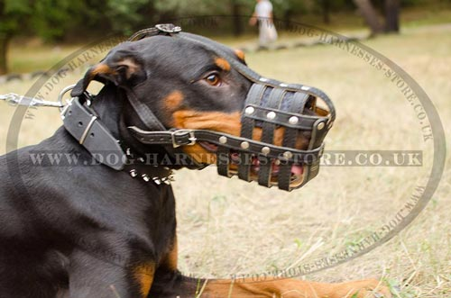 Best Dog Muzzle for Walking