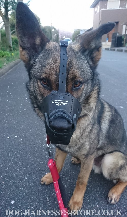 Leather Dog Muzzles for Sale