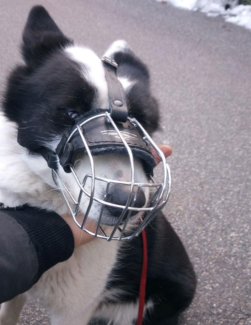 Karelian Bear Dog Muzzle - £28.90