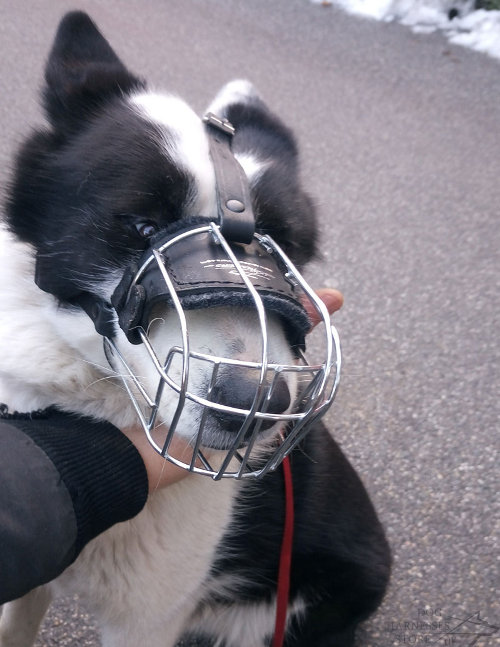 Lightweight Wire Basket Dog Muzzle