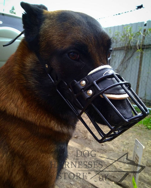 Muzzle for Belgian Malinois